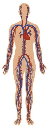Tijelo - sistem